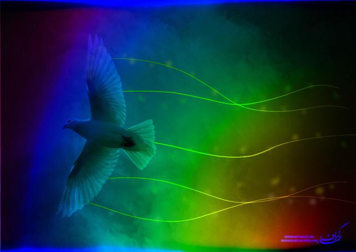 کبوتر رنگی